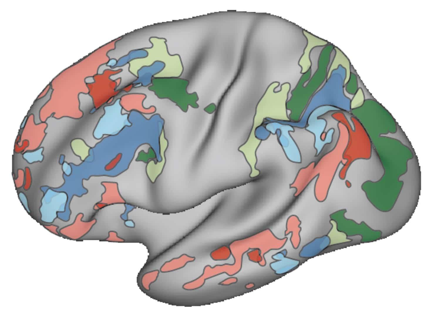 Buckner Brain MRI Image Crop
